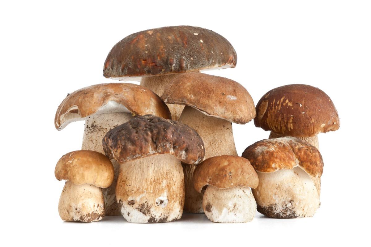 funghi5